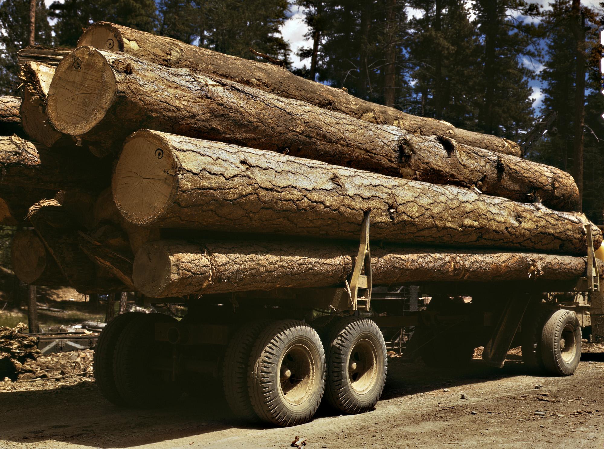 ארבע סיבות מדוע לבחור במחסן עצים בית נחמיה.